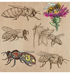 Bees beekeeping and honey - hand drawn pack 2 vector