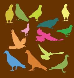 pigeon 3 vector image