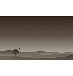 Silhouette of Ostrich in desert vector image