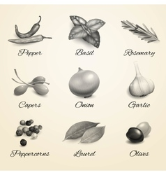 Herbs and spices black and white set vector