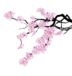 Branch of cherry tree vector