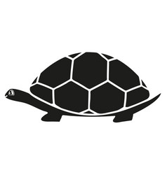 black turtle icon vector image