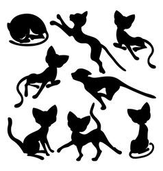 Eight silhouettes of funny cats vector image