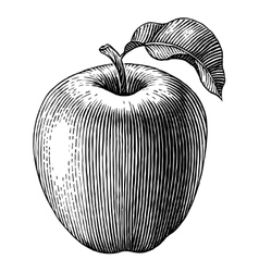 Engraved apple vector