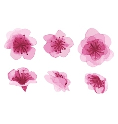 Hand-drawn sakura flowers vector