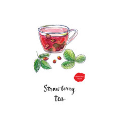 fruit tea with wild strawberries watercolor vector image