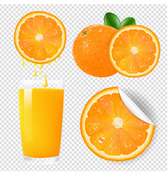 orange fruits set vector image vector image