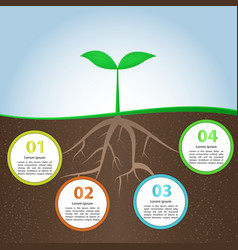 Plant And Root Infographic Background Design Templ vector image