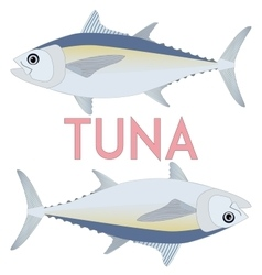 Tuna fish cool vector