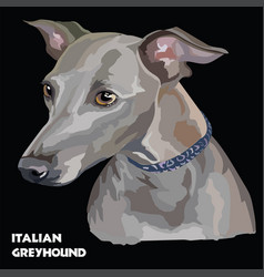 Italian greyhound colorful portrait vector