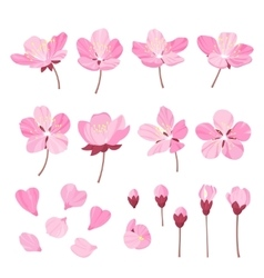 Set of beautiful cherry tree flowers isolated on vector image