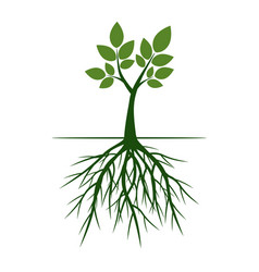 Green trees with roots vector