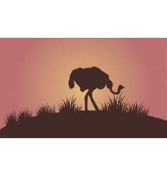 Silhouette of ostrich in the fields vector