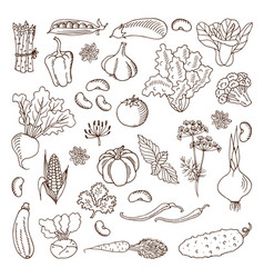 vegetables design elements vector image