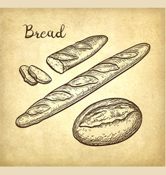 Baguette and rustic bread vector