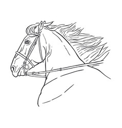 Running horse head realistic drawing vector