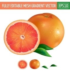 Grapefruit on white background vector