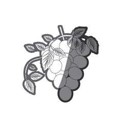 Grayscale silhouette with bunch of grapes icon vector