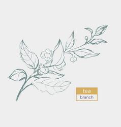 tea branch sketch vector image vector image