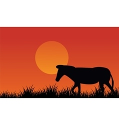 Silhouette of zebra scenery at afternoon vector