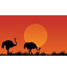 Silhouette of ostrich scenery at afternoon vector