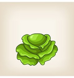 Cute green hand drawn cabbage vector