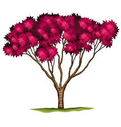 A bloodgood japanese maple plant vector
