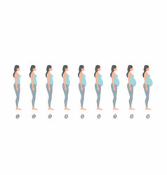 Stages of pregnancy vector
