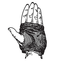 Glove vector image