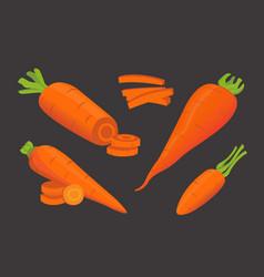 set carrot vector image