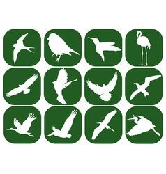 birds in the green squares vector image
