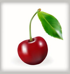 Sweet cherry icon vector image