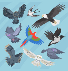 Different flying birds breed species race strain vector