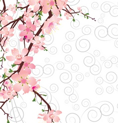 sakura branch on ornate background vector