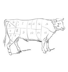 Beef parts vector image