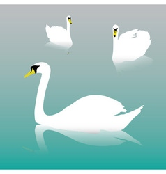 Swan on the watter eps10 vector