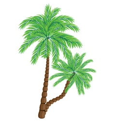 Two palm trees2 vector