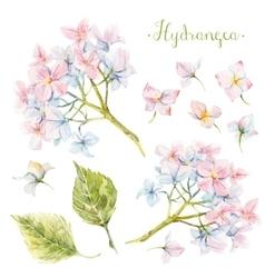 Watercolor hydrangea set vector image vector image