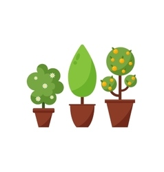 Set of decorative plants in pots vector image