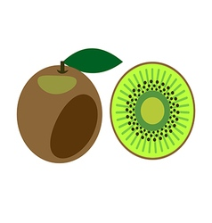 Detailed icon of kiwi vector