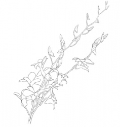 Blooming flowers vector