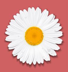 Daisy flower chamomile summer concept vector