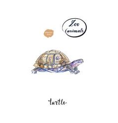 land turtle tortoise in watercolor vector image