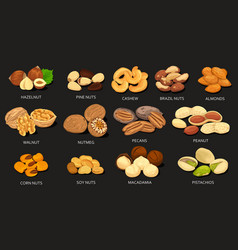 Set of grains and beans of food nuts vector