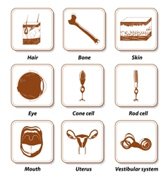 Human anatomy icon set vector