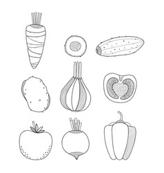 Linear of vegetables carrots vector