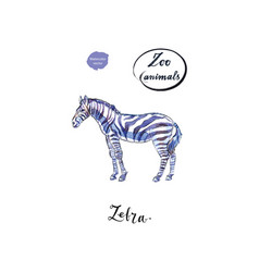 young standing zebra in watercolor vector image vector image