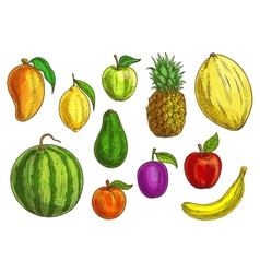 Tropical and exotic fruits set vector