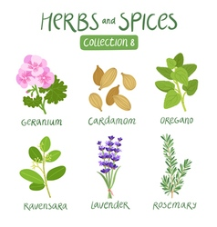 Herbs and spices collection 8 vector