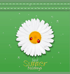 Daisy flower chamomile best summer holidays vector